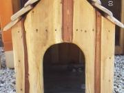 12 Kutyaház, akác.jpg